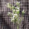 Hoa bi cành cao xanh nhạt - hoa giả đẹp