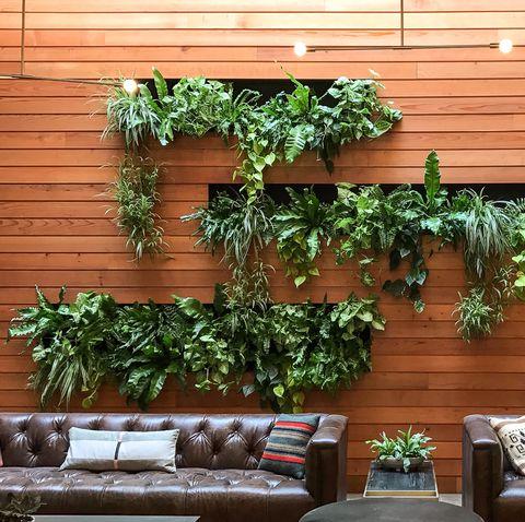 Cây nhà, Tường, Thực vật, Lọ hoa, Phòng, Đồ nội thất, Thiết kế nội thất, Gỗ, Thảo mộc, Kiến trúc,